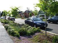green infrastructure photo 3