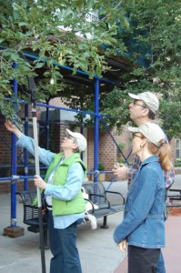 TreesNY staff and Citizen Pruners inspect New York City trees.