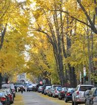 urban tree canopy street with cars