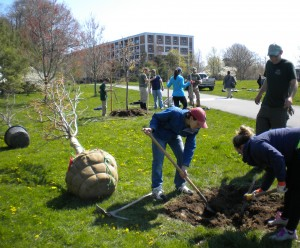 Evan tree planting on the Neponset River Greenway, Dorchester, MA