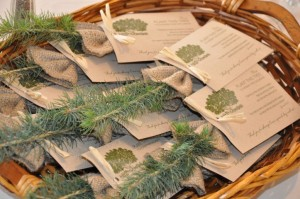 Colorado Spruce seedlings given to those who attended Evan's Bar Mitzvah
