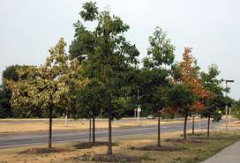 drought and trees under stress