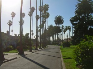 Palm_Trees_in_San_Jose_California