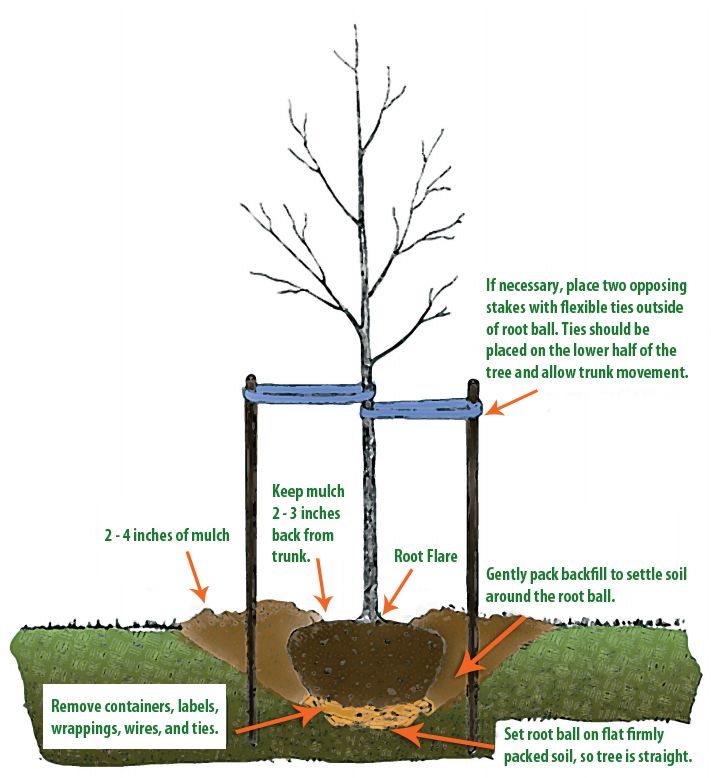 How Trees Grow Diagram