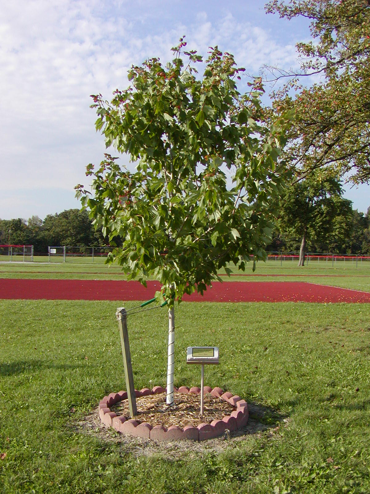 actrees members invited to plant memorial trees alliance for