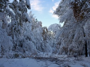 Downed_trees_blocking_road_after_October_2011_nor'easter,_Granby,_CT