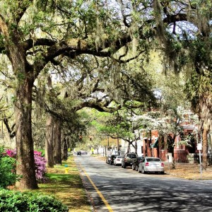 Savannah, GA Tree Canopy