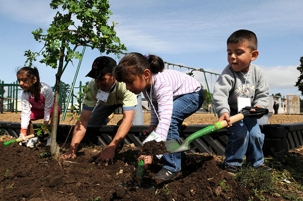 800 New Trees For Louisville Schools – ACTrees