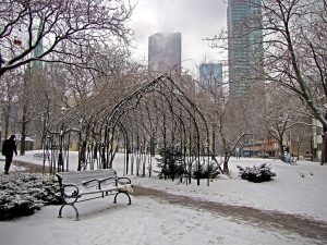 city-trees-in-winter