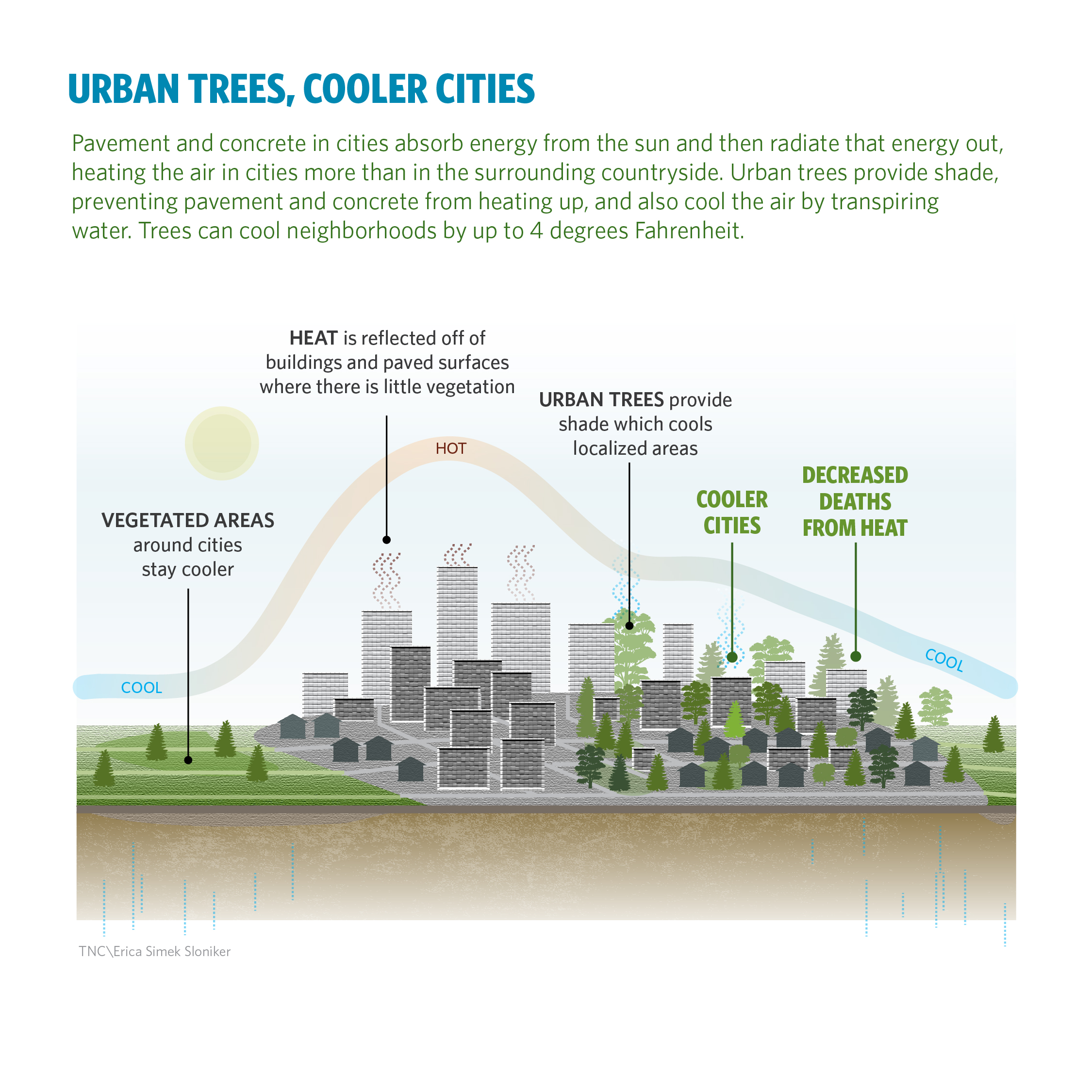 Wholesale High Quality Air Cooling Summer And Winter: Urban Trees Can Save Lives By Reducing Air Pollution And
